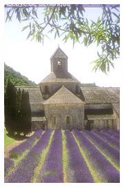 Tourisme Provence: Abbaye de Senanque